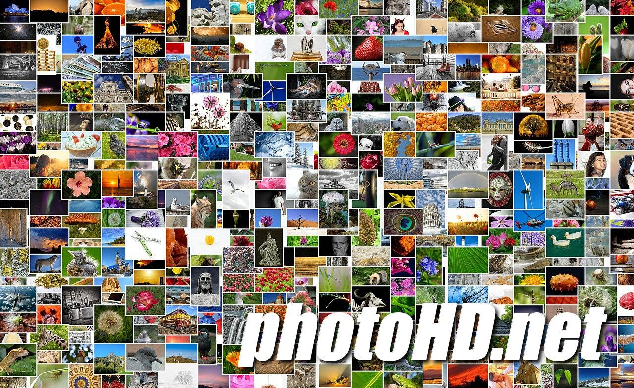 Darmowe, zdjęcia, obrazy, wektory - Free photos